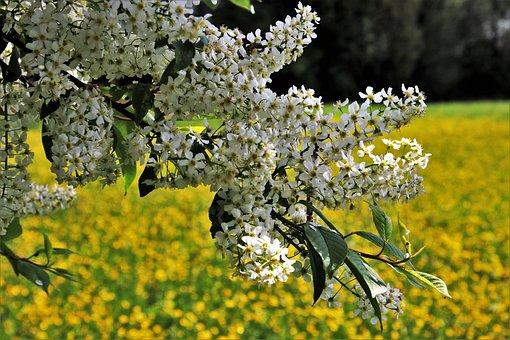 Flower, Plant, Nature, Tree, Season, Branch, Sunny
