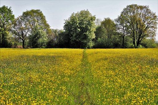 Spring, Tree, Nature, Field, Landscape