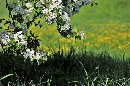 Spring, Nature, Flower, Lawn, Plant, Rural District