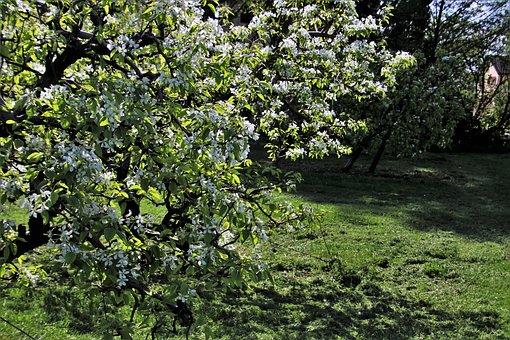 Sad, Spring, Fruit Trees, Flowering