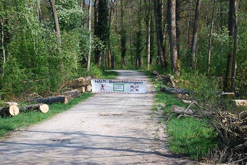 Wood, Nature, Landscape, Summer, Environment, Park
