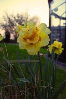 Nature, Flower, Plant, Garden, Summer, Season, Color