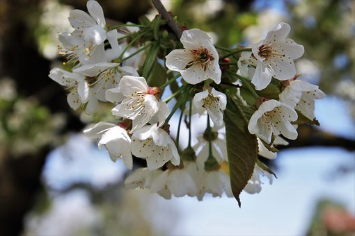 Flower, Spring, Tree, Branch, Nature, Plant, Blooming