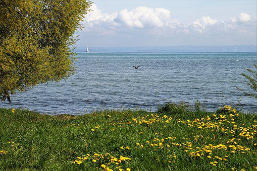 Spring, Lake, Grass, Dandelion, Flowering, Beach, Tree