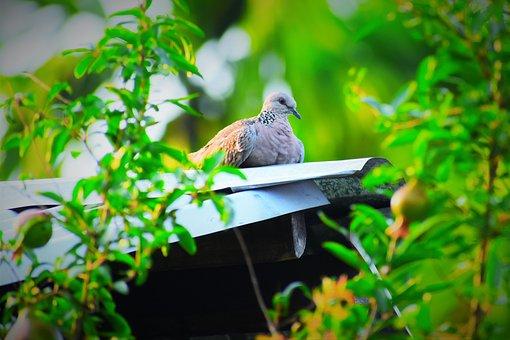 Nature, Garden, Leaf, Tree, Bird