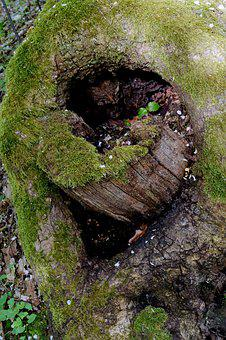 Tree Hole, Sawed Off, Moss, Forest, Deciduous Tree