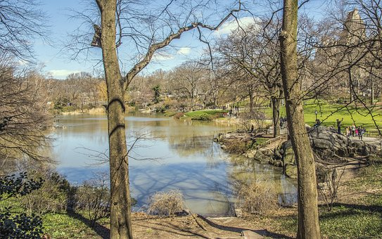 Nature, Tree, Landscape, Wood, Water, Central Park