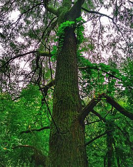 Tree, Nature, Wood, Sheet