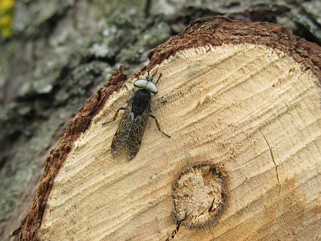 Insect, Brake, Tree, Branch, Cut Off, Wood, Woods