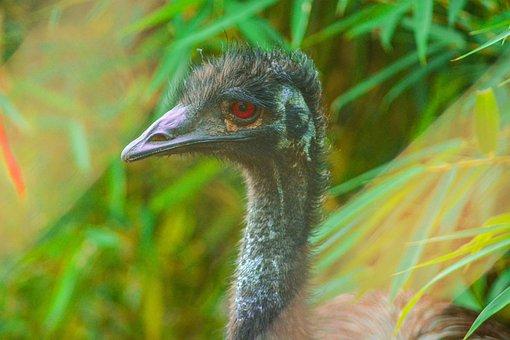 Bird, Feather, Wildlife, Animal, Nature, Beak, Wild