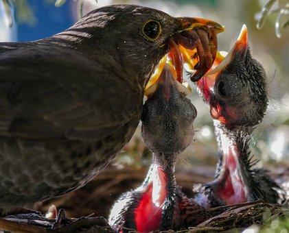 Bird, Nature, Animal, Blackbird, Nest, Feed, Worm