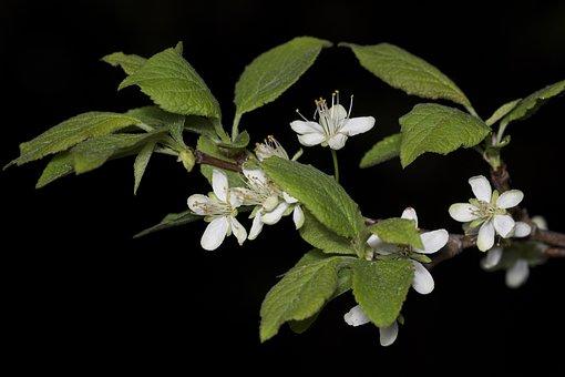 Bloom, Apple Tree, Jar, Tree, Fruit Tree, Bely Chp