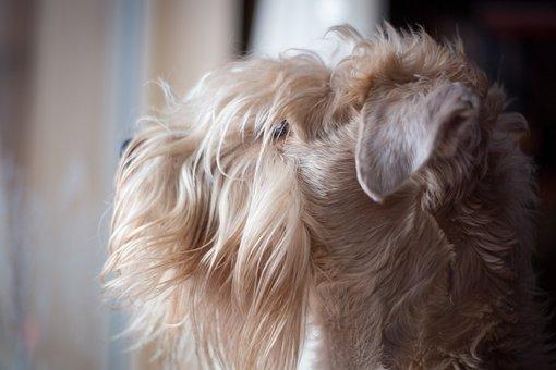 Dog, Animal, Pet, Mammal, Fur, Canine, Cute, Portrait