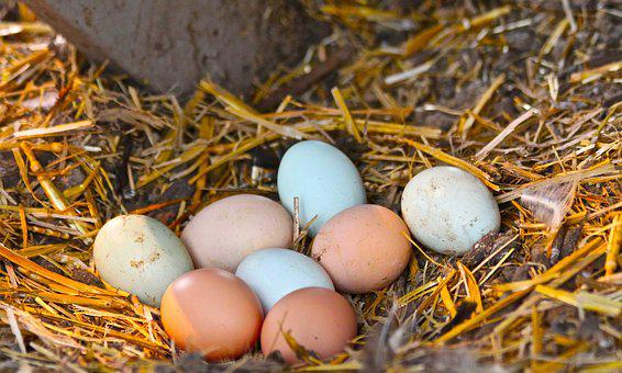 Nest, Egg, Easter, Hay, Food