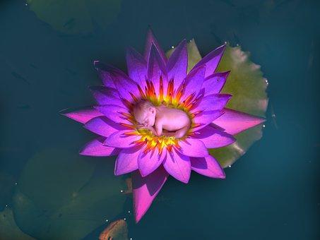 Flower, Flora, Lotus, Aquatic, Nature, Baby, Cute