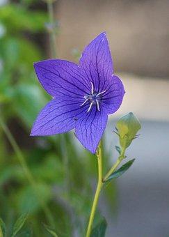 Flower, Nature, Flora, Garden, Summer, Blooming, Petal