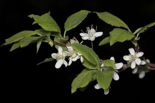 Flower, Bloom, Tree, Apple Tree, Spring, Fruit Tree