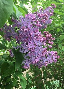 Flower, Plant, Garden, Nature, Leaf, Flowers, Petal