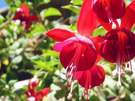 Nature, Garden, Plant, Leaf, Flower, Outdoors, Petal