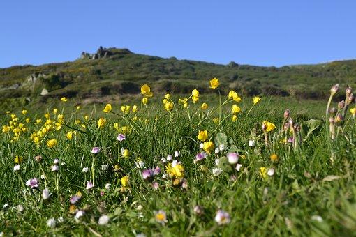 Nature, Hayfield, Field, Lawn