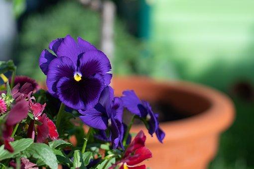 Flower, Plant, Nature, Leaf, Garden, Floral, Summer