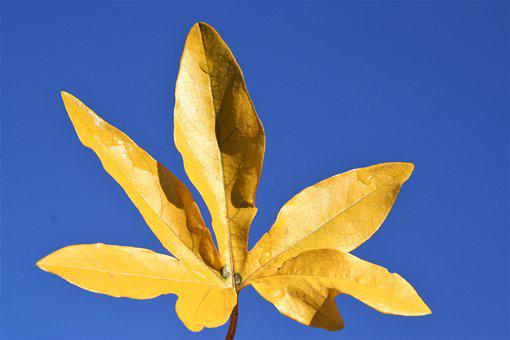 Nature, Leaf, Flora, Desktop, Fall
