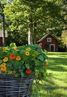 Flower, Garden, Summer, Nature, Plant, Red Cottage