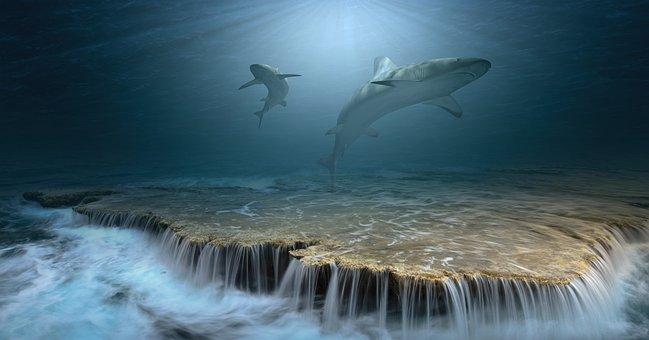 Hai, Sharks, Sea, Ocean, Water, Underwater, Light