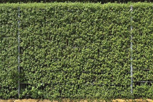 Fence, Hedge, Privet, Plant, Leaf, Garden, Demarcation