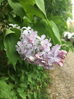 Plant, Flower, Nature, Garden, Leaf, Flowers, Floral
