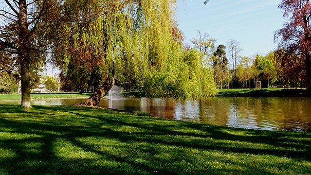 Tree, Park, Nature, Lawn, Lake, Turf, Reflections, Zen