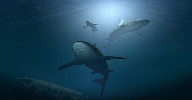 Hai, Sharks, Sea, Ocean, Water, Underwater, Wreck