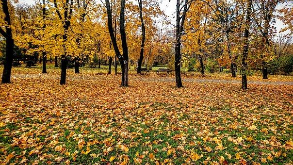 Autumn, Sheet, Nature, Season, Tree, Park, No One