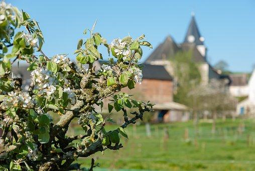 Tree, Nature, Summer, Plant, Sky, Village, France