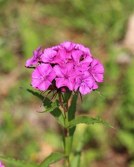 Nature, Garden, Flora, Plant, Spring, Gardening, Flower