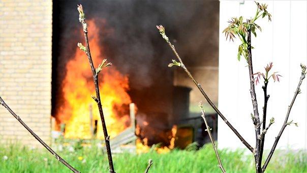 Nature, Plant, Flame, Outdoor, Summer, Non, Garden