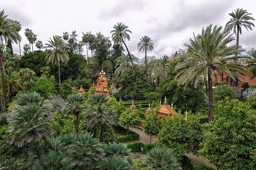 Palm, Tree, Tropical, Summer, Travel, Seville, Spain