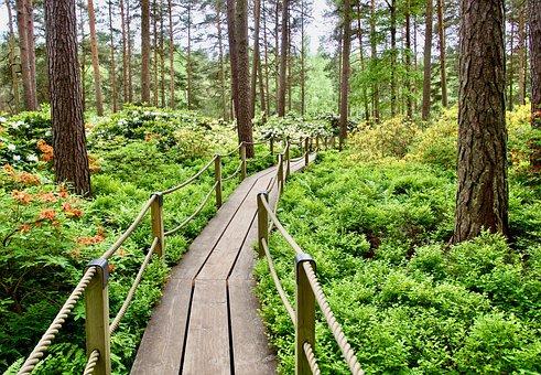 Pine, Nature, Tree, Outdoors