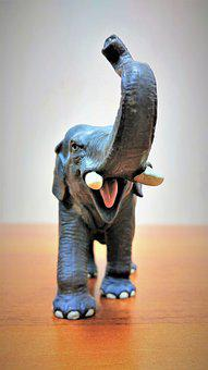 Out Of Focus, Young, Elephant Angry, Background