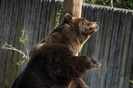 Mammal, Animal World, Nature, Animal, Wild, Park, Large