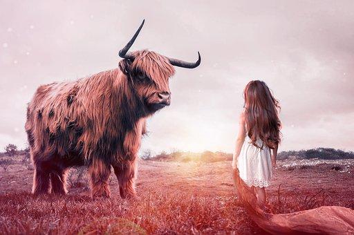 Child, Bull, Beef, Livestock, Ruminant, Cow