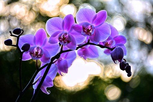 Flower, Nature, Flora, Garden, Petal, Blooming