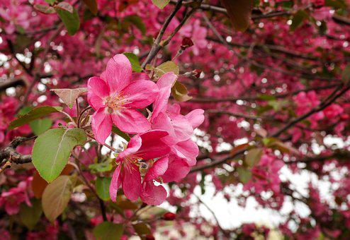 Flower, Branch, Tree, Nature, Flora, Blooming, Garden