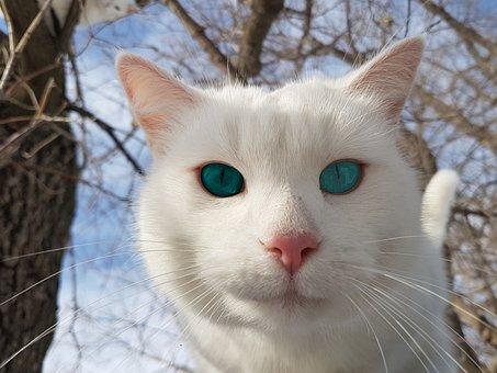 Cute, Animal, Mammal, Cat