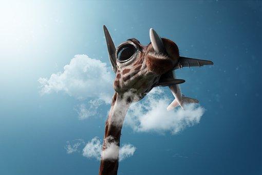 Giraffe, Environment, Nature Conservation, Sky, Clouds