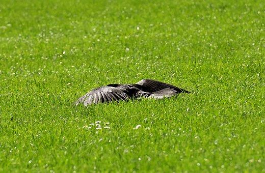 Crow, Sun, Rest, Wing, Spread