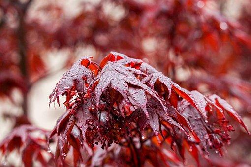 Fall, Leaf, Season, Nature, Tree