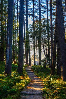 Wood, Nature, Tree, Landscape, Leaf, Fall, Sun