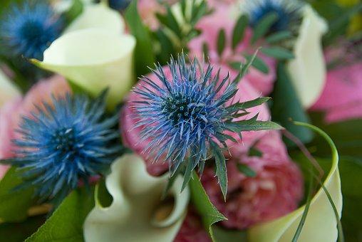 Flower, Thistles, Lys, Bouquet