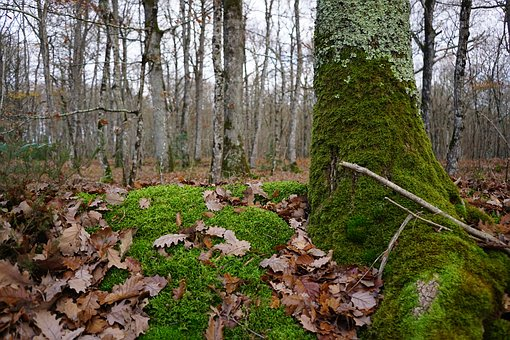 Wood, Nature, Tree, Leaf, Fall, Forest, Foam, Foliage